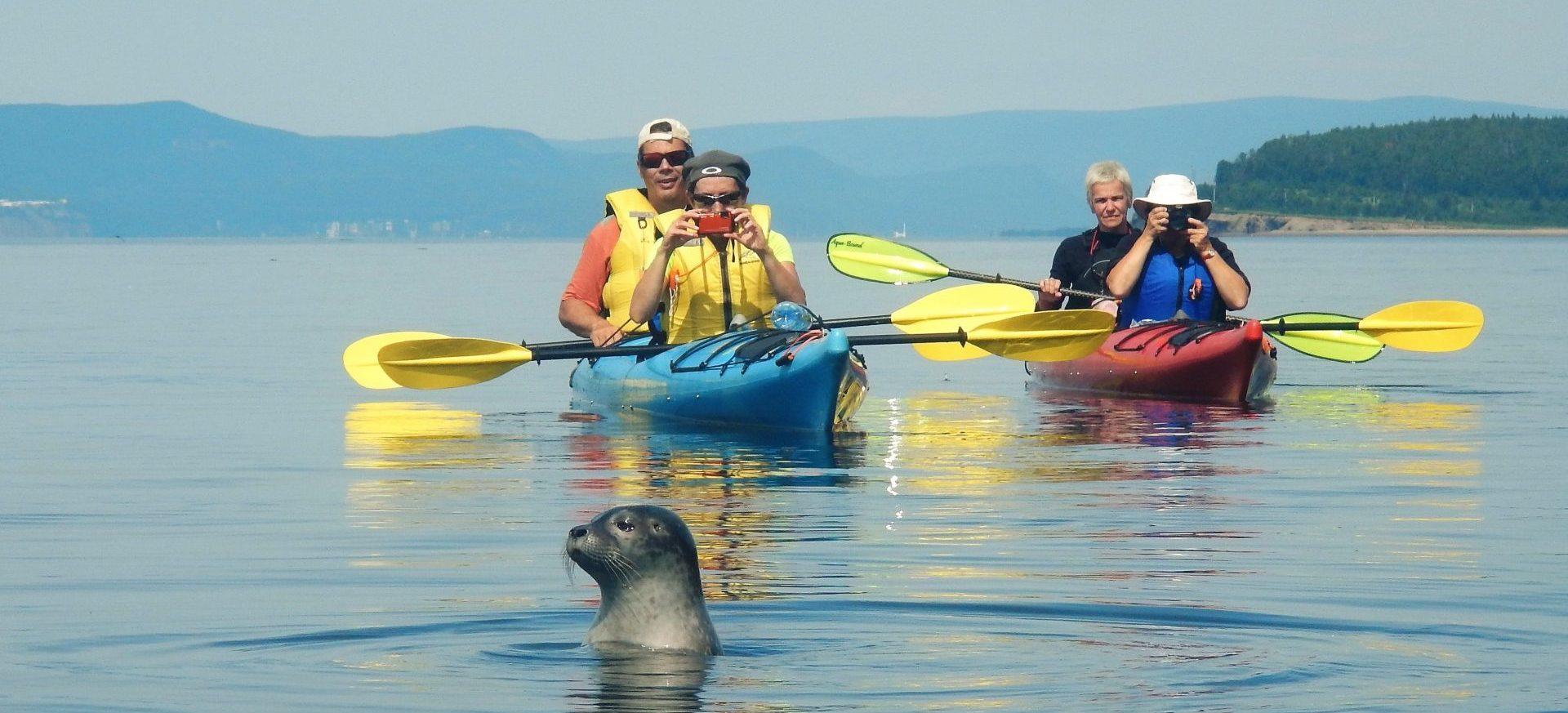 Cap Aventure, kayak et safari-zodiac