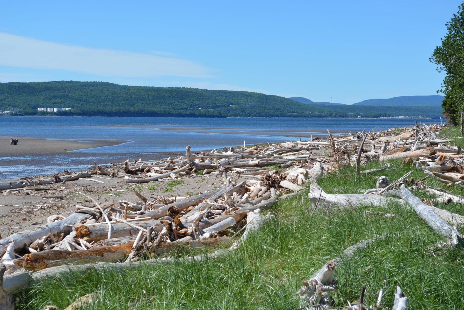 Le bois de plage, un précieux allié contre l'érosion des berges